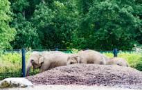 Daugėja besilankančių Dublino zoologijos sode